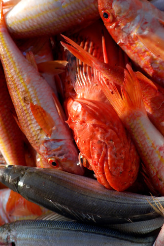 Seafood distribution software: Traceability