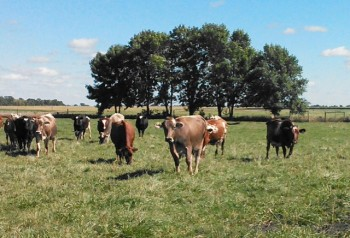 The Lone Grazer Creamery uses milk from grass-fed cows in Minnesota