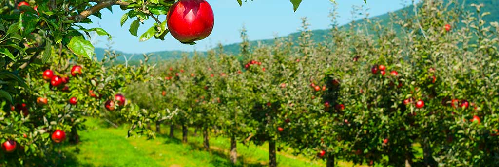 Cider production software for small business